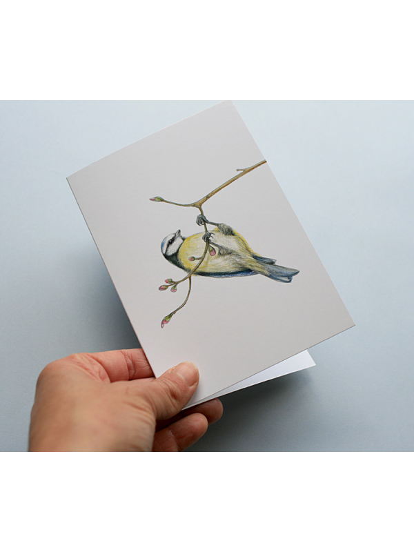 A6 CARD –blue tit hanging from a tree branch.