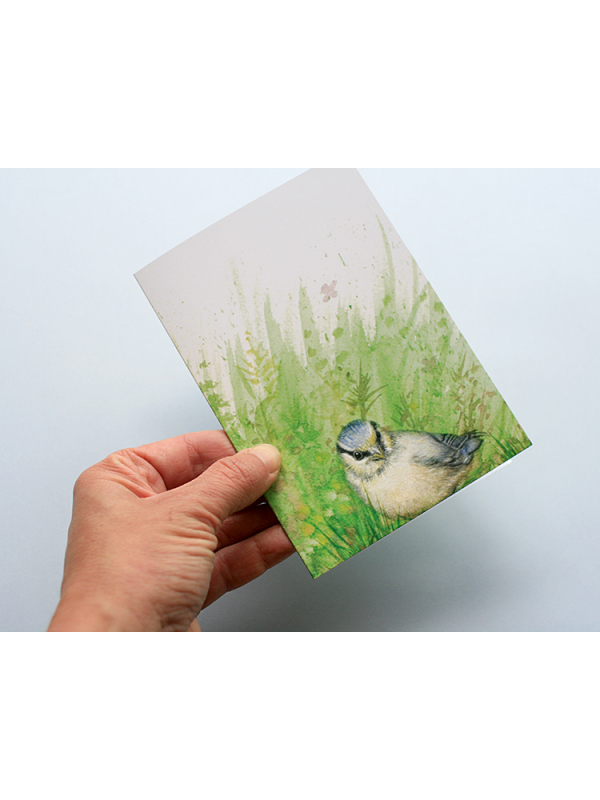 A6 CARD –blue tit chick – front.
