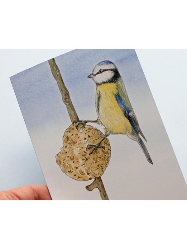 A6 CARD –feeding blue tit – illustration from 'Blue tit chick'_closeup