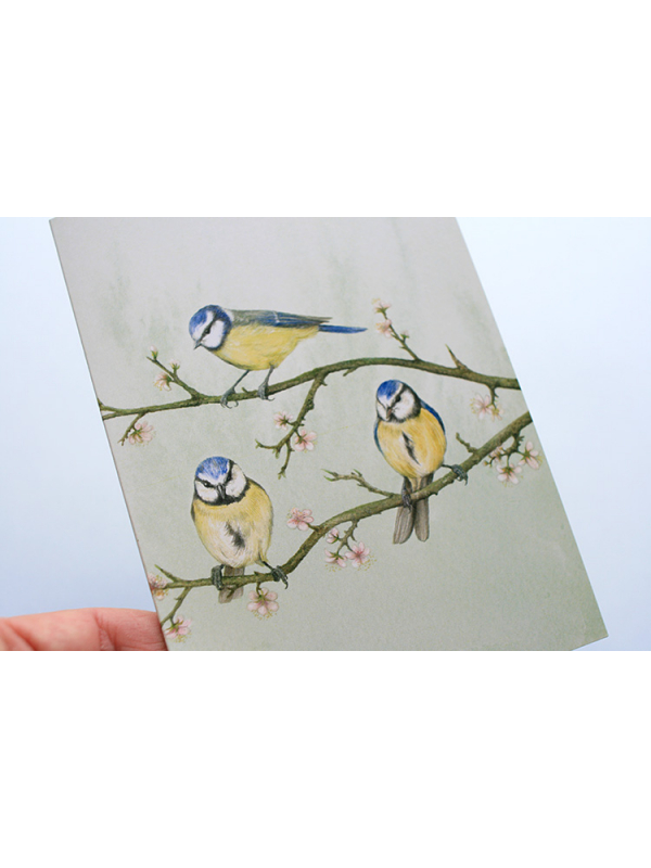 A6 CARD –blue tits sitting on a tree branch_front_close-up.
