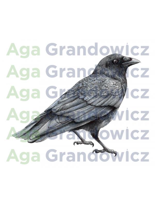 Crow – original artwork by Aga Grandowicz –close-up.