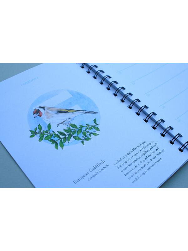 European-Birds-Diary-by-Aga-Grandowicz_February_Goldfinch