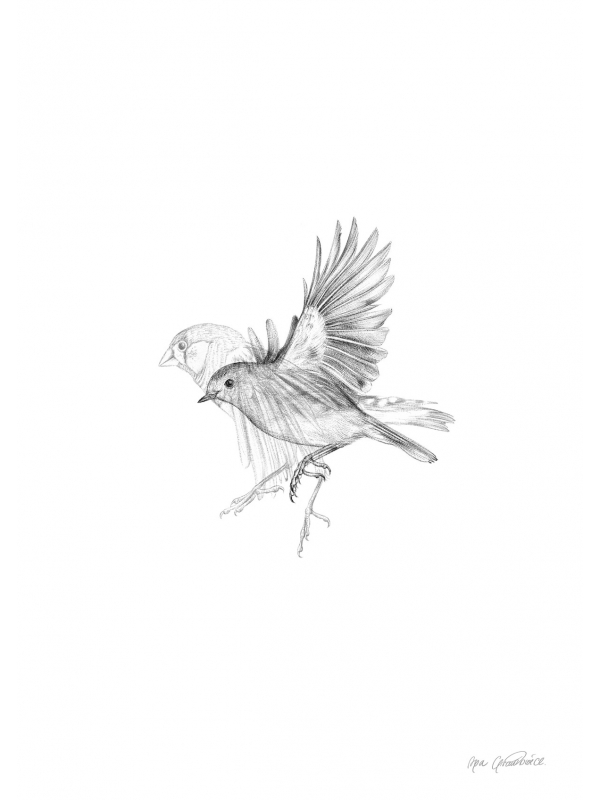 Finch and robin – fine art prints by Aga Grandowicz