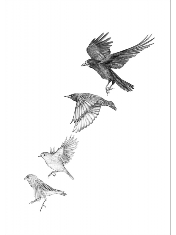 Garden birds #1 – A4 prints by Aga Grandowicz