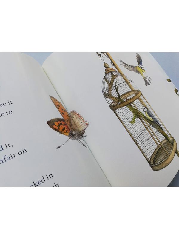 Blue tit chick – children's book by Bernardine Mulryan and Aga Grandowicz_s4