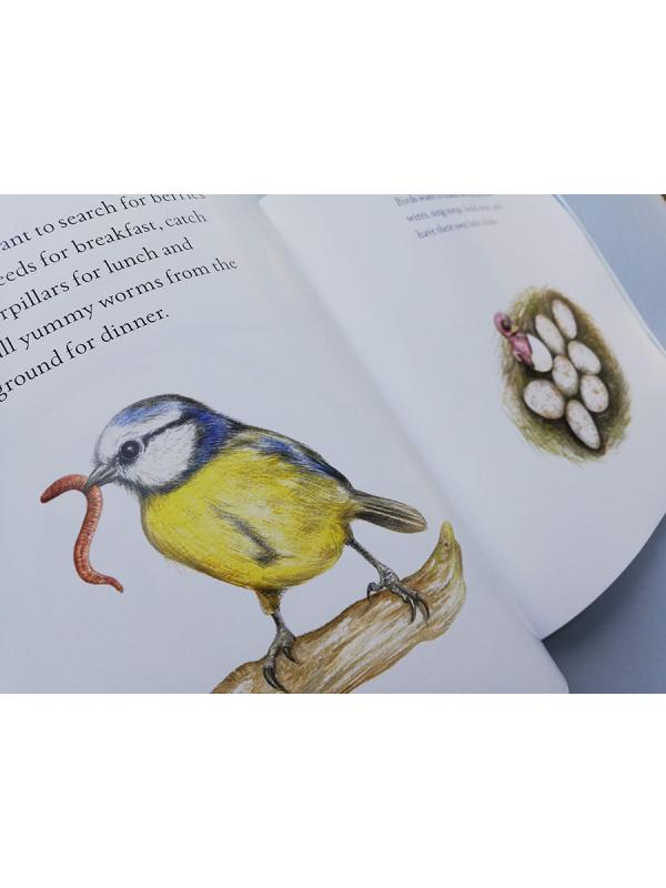 Blue tit chick – children's book by Bernardine Mulryan and Aga Grandowicz_s5