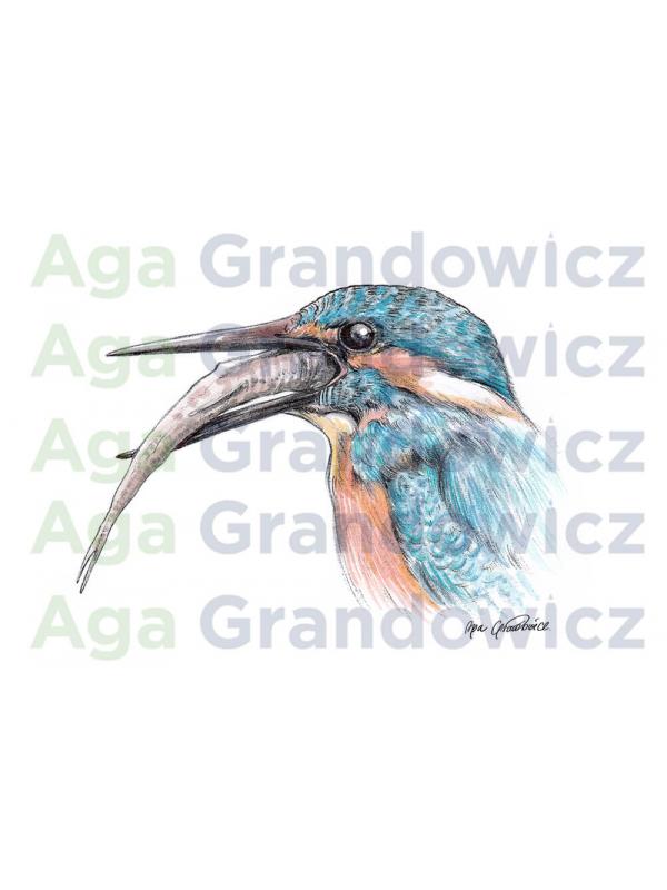 Kingfisher #2 – original artwork by Aga Grandowicz –close-up.