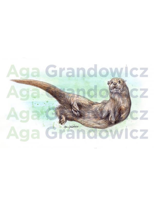 Eurasian otter – original artwork by Aga Grandowicz –close-up.