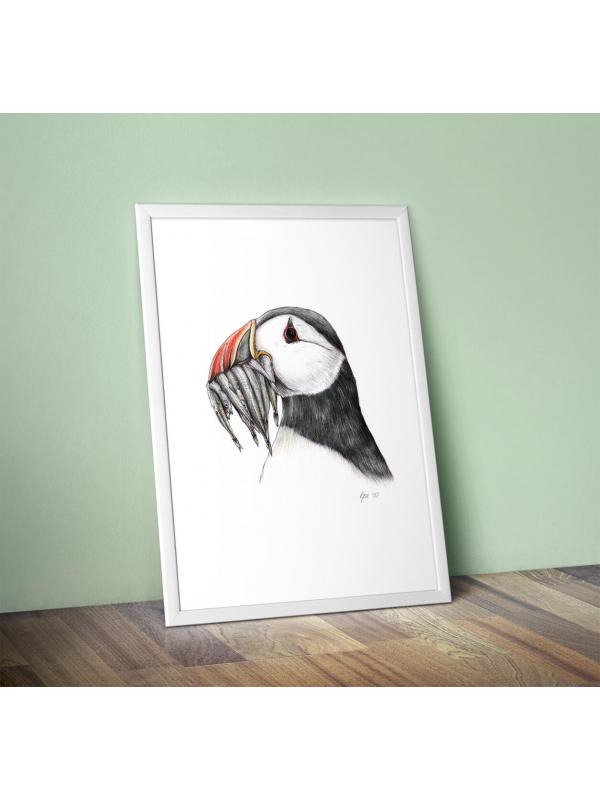 Atlantic puffin, original wildlife illustration by Aga Grandowicz.