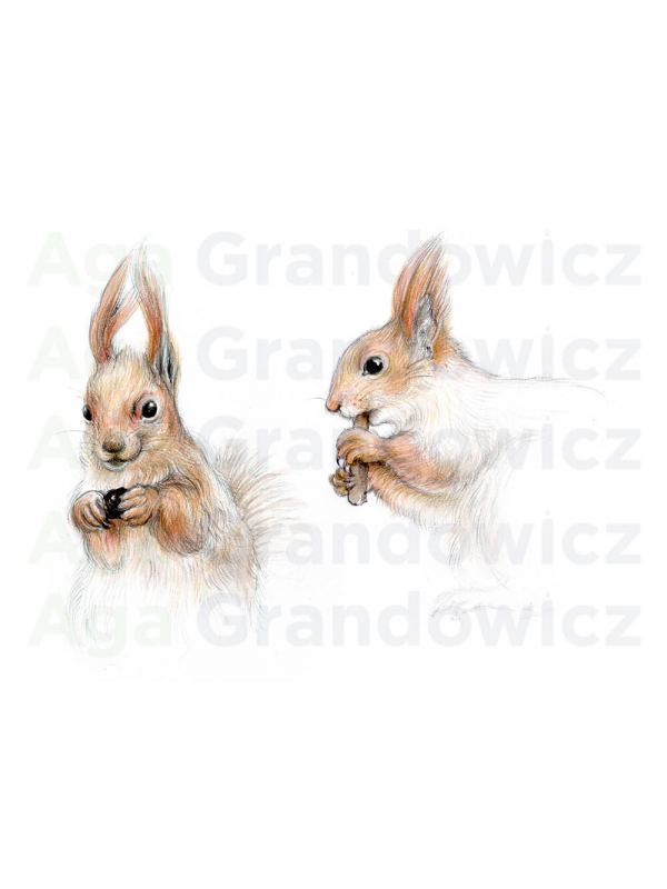 Two red squirrels –original artwork by Aga Grandowicz – close-up