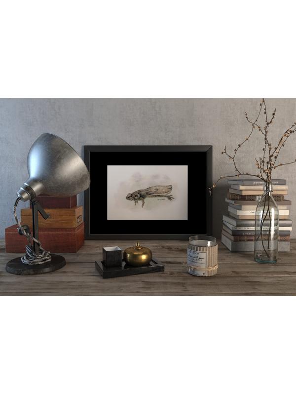 Tadpole of a Common frog – original artwork by Aga Grandowicz.