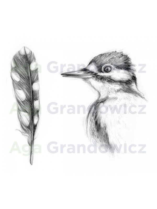 Great spotted woodpecker #2 –original artwork –close-up