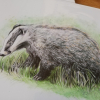 European Badger, A4 fine art prints by Aga Grandowicz