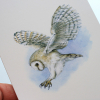 Greeting card, A5 folded to A6, with wildlife illustration of a barn owl (2).