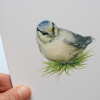 A6 CARD –blue tit chick in the grass_close-up.