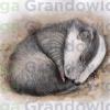 Sleeping cub of a European badger – original artwork by Aga Grandowicz_2
