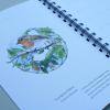 European-Birds-Diary-by-Aga-Grandowicz_January_Robin.