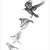 Garden birds #1 – A4 prints by Aga Grandowicz