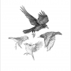 Garden birds #2 – A4 prints by Aga Grandowicz