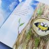 Blue tit chick – children's book by Bernardine Mulryan and Aga Grandowicz_facts