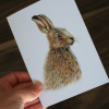 CARD – Wildlife illustration of an Irish hare, as featured in 'Dr Hibernica Finc