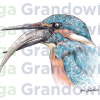 Kingfisher #2 – original artwork by Aga Grandowicz – close-up.