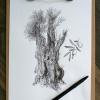 Olive tree – original artwork by Aga Grandowicz_img1.