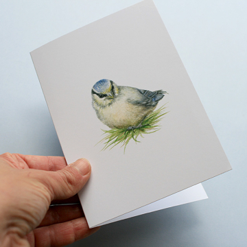 A6 CARD –blue tit chick in the grass_front.