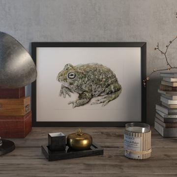 Natterjack toad –original artwork by Aga Grandowicz