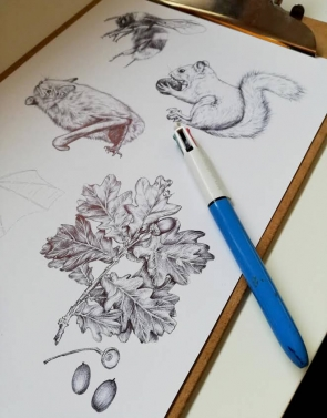 Wildlife illustrations for an information board featuring animal and plant drawings – work in progress by Aga Grandowicz.