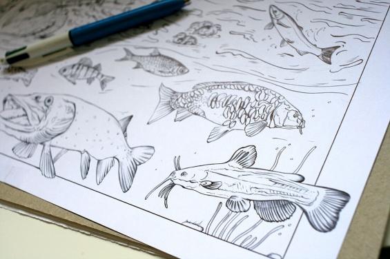 Blackwater habitat – fish drawings by Aga Grandowicz, photo 2