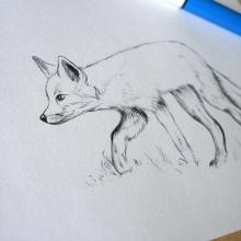 fox_bw_1.jpg