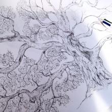 oak-tree1.jpg