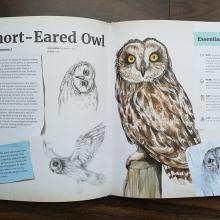 short-eared-owl_cropped_1.jpg