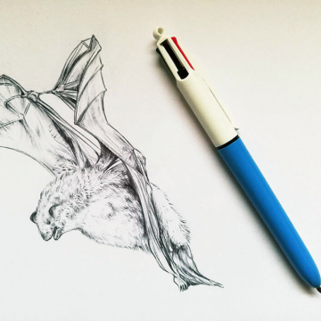 Daubenton's bat – drawing by Aga Grandowicz