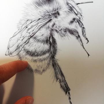 Bee art by Aga Grandowicz.jpg