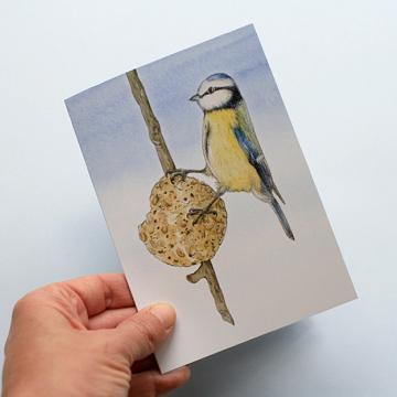 A6 CARD –feeding blue tit