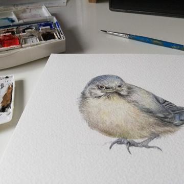 Illustration from Blue tit chick – children's book by Bernardine Mulryan and Aga Grandowicz