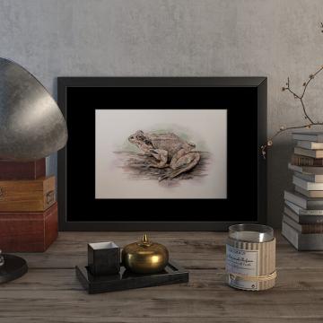Common frog – original artwork