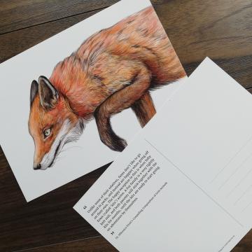 A5 CARD – Red fox.