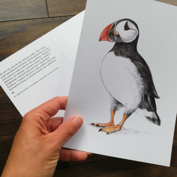 A5 CARD – Atlantic Puffin