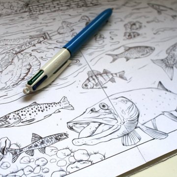 Blackwater habitat – fish drawings by Aga Grandowicz, photo 1