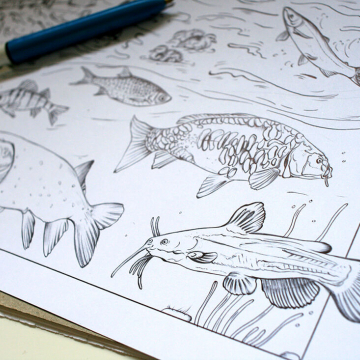 Blackwater habitat – fish drawings by Aga Grandowicz, photo 2