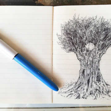 Drawing of an olive tree by Aga Grandowicz, photo 3