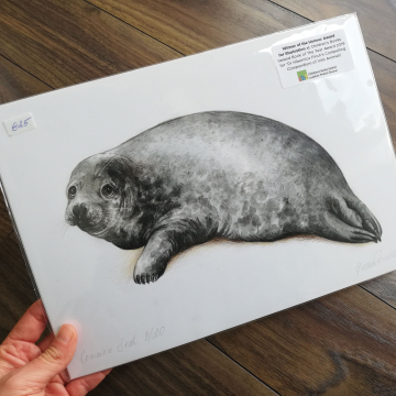 Seal, A4 fine art prints, limited edition (20)