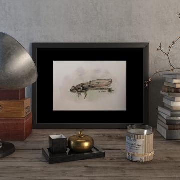 Tadpole of a Common frog – original artwork